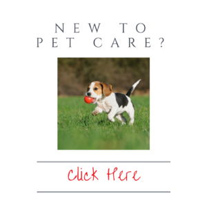 new-to-pet-care-1